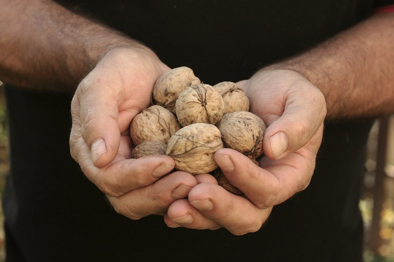 my dad with walnuts