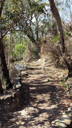 Glenbrook, Blue Mountains National Park: The Oaks Fire Trail