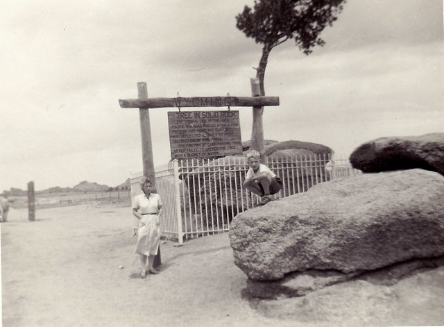 c. 1951-52 Tree in Solid Rock