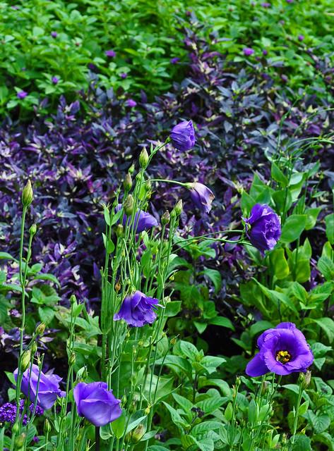 Flower Garden Walk (5)