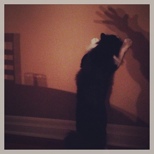 #fmsphotoaday December 6 - Shadow #catsofinstagram