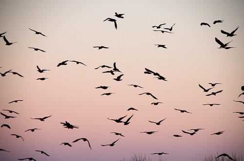 Dump Ravens