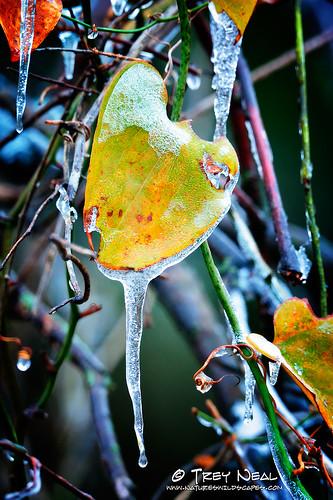 ice landscape frozen