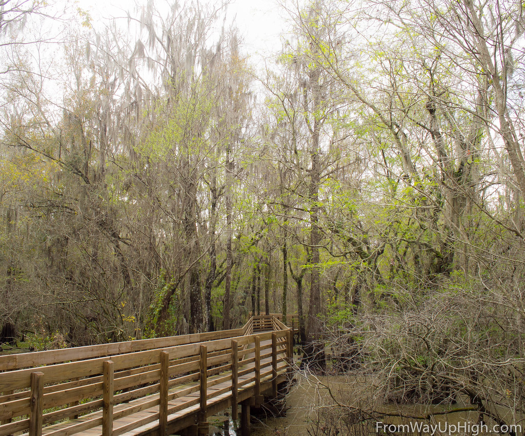 Lettuce Lake Bark boardwalk