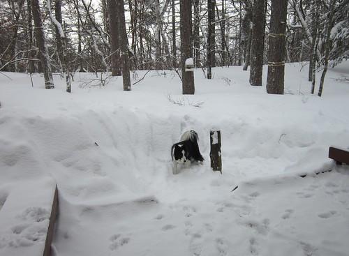 一部雪掻きした庭とベランダ 2014年12月15日10: 24 by Poran111