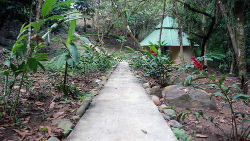 Around the jungle house