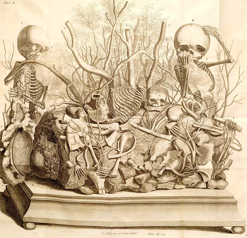 Frederik Ruysch The Artist Of Death The Public Domain Review