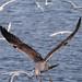 Edg_Res_Birds-18.jpg