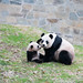 Bao Bao's Second Day Outside April, 2, 2014 by Smithsonian's National Zoo