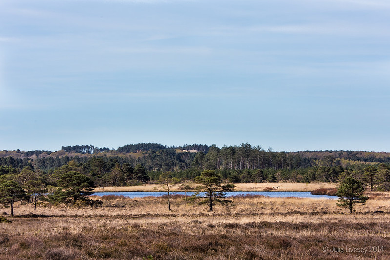 View over Morden Bog