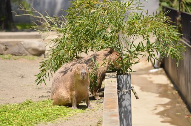 上野動物園・井の頭自然文化園 2014年5月4日
