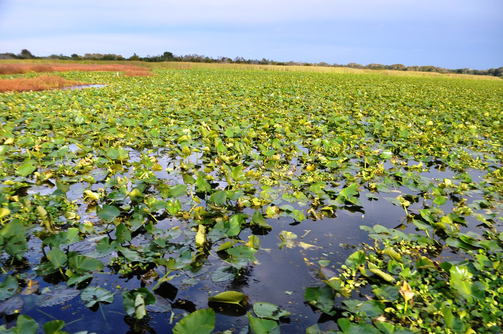 Orlando Airboat Tours Explores the Headwaters of the Everglades