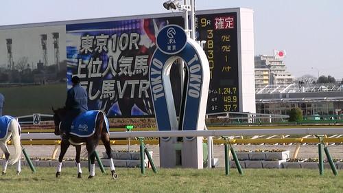 20150215_東京競馬場