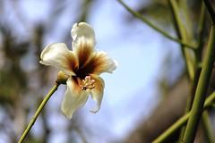 TerriMando_Flower