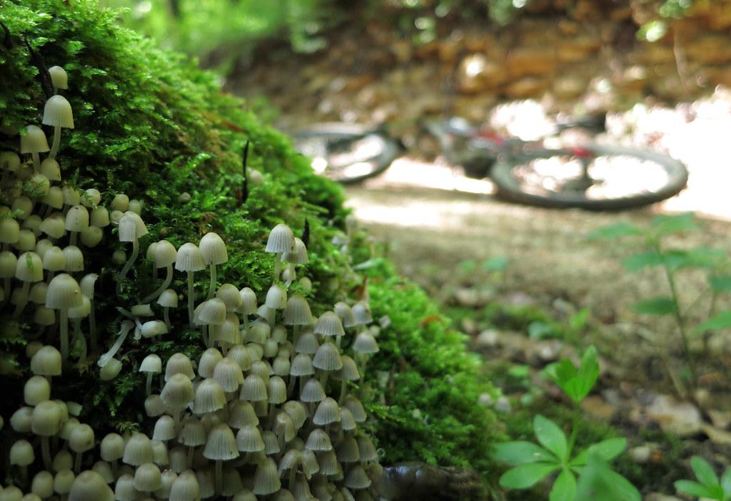 Bonsai Pilzchen