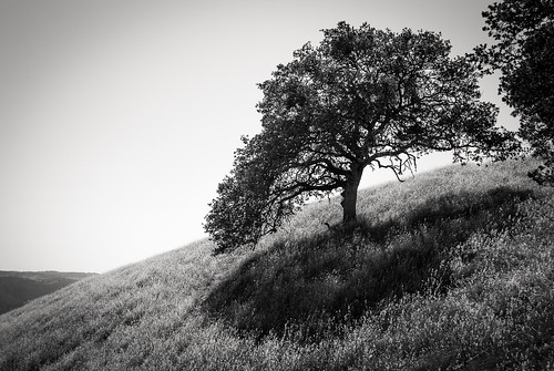 trees blackandwhite bw grass landscape hill scapes