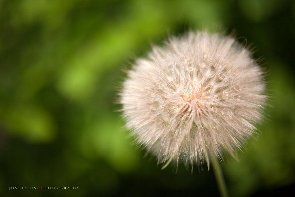 IMAGE: http://farm8.staticflickr.com/7336/9195046423_3e9894ce5d_b.jpg