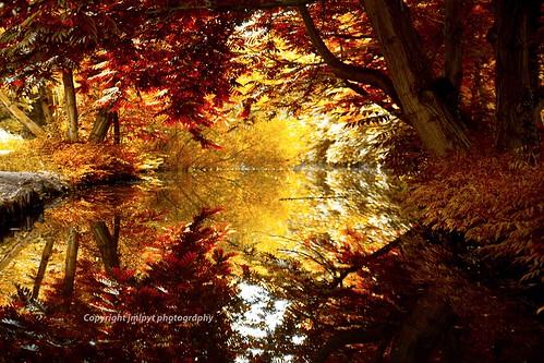 paris reflection forest river landscape rocks rivière reflect boisdevincennes paysages forêt bois rochers espacesverts parksandgardens parcsetjardins natureetpaysages