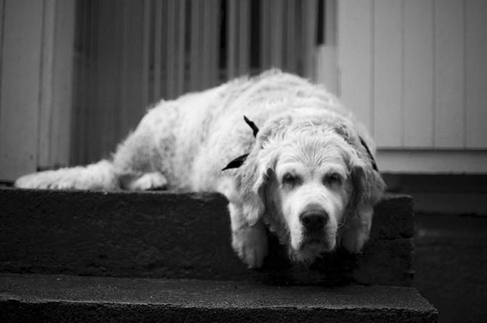 koiraepäilee