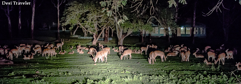 spotted deer at forest rest house Bandipur