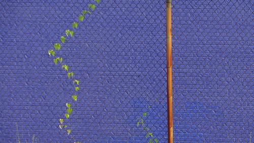 DSC03545  180713 creeper pole wall
