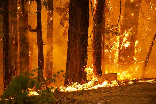 california wild usa fire geoff flames ground yosemite quinn geoffrey rimfire onearthnrdc