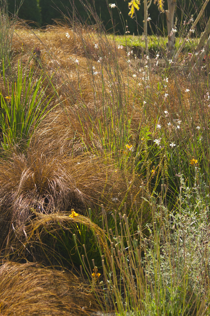 bob hyland carex and little bluestem