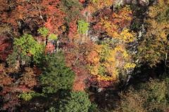 Fall / 秋(あき)