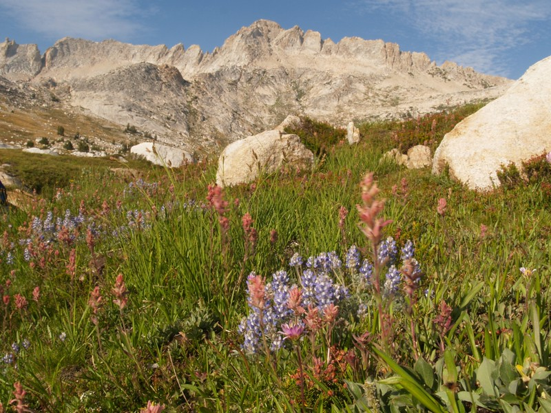 Matterhorn Peak and the Sawtooth Ridge, with Lupines and Indian Paintbrush