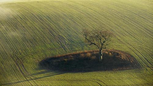 trees landscape nationalpark hampshire southdowns southdownsnationalpark