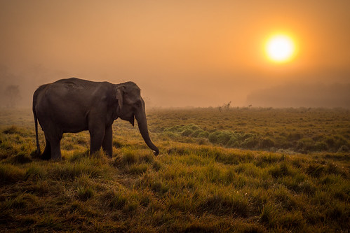 Elephant at sunrise