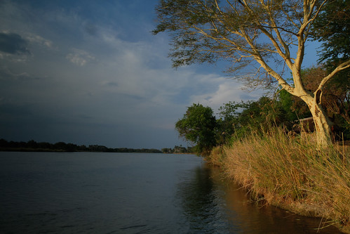 africa trees plants water river ef1635mmf28lusm malawi gamepark wildlifepreserve liwonde fevertree liwondenationalpark shireriver canoneos7d vachelliaxanthophloea