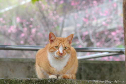 那覇市与儀公園の猫