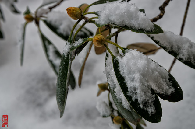 「降雪」 室生寺 - 奈良