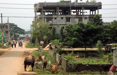Post industrial pastoral, cows, rickshaws, people walking, dirt roads, folks hanging out in a shed, clothes hanging to dry in the top story of a concrete building, trees, brick fence, Dhaka, Bangladesh by Wonderlane