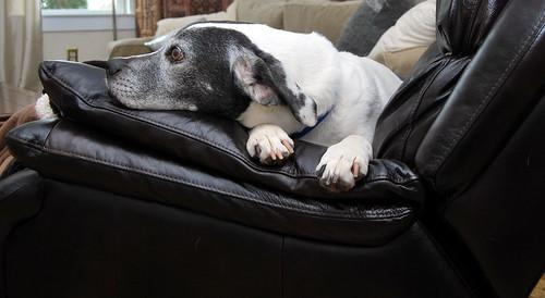 WPIR - in my chair-001