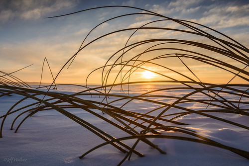 winter sunset canada landscape frozen alberta stalbert biglake hardstembulrush scirpusacutus