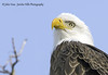Bald Eagle Close Up by Jericho Hills Photography