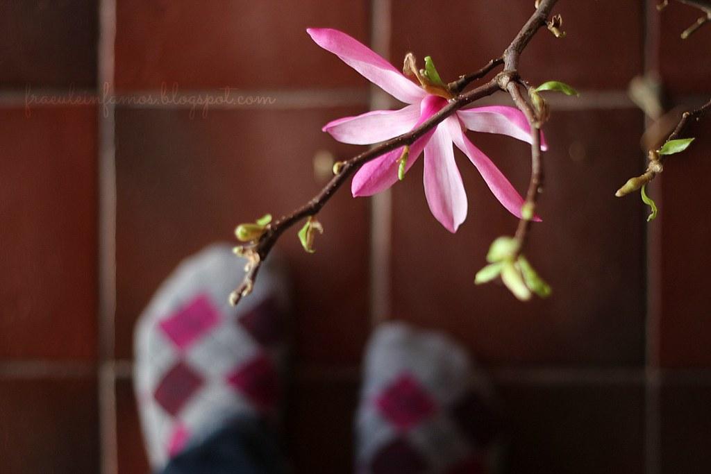 12 von 12 | Magnolienfüße