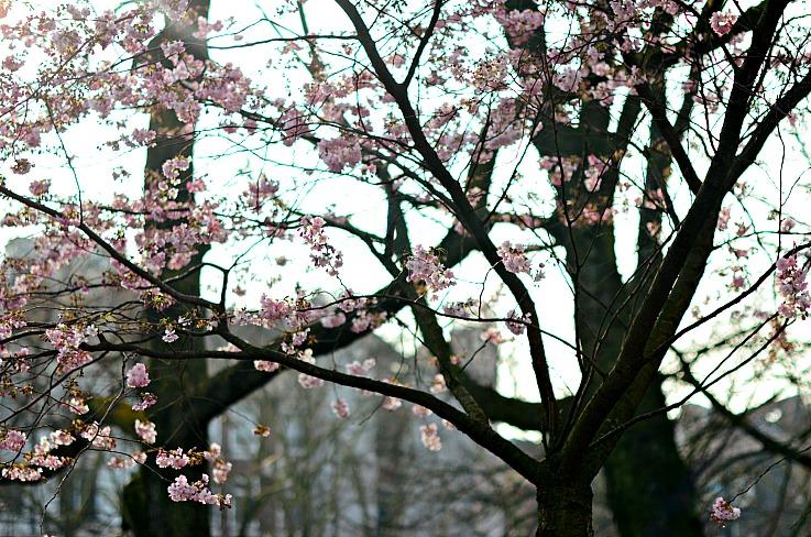 DSC_7213 blossom