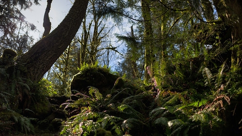 trees sunlight nature forest canon dof depthoffield vegetation pacificnorthwest lush ferns washingtonstate canoneos5dmarkiii sigma35mmf14dghsmart
