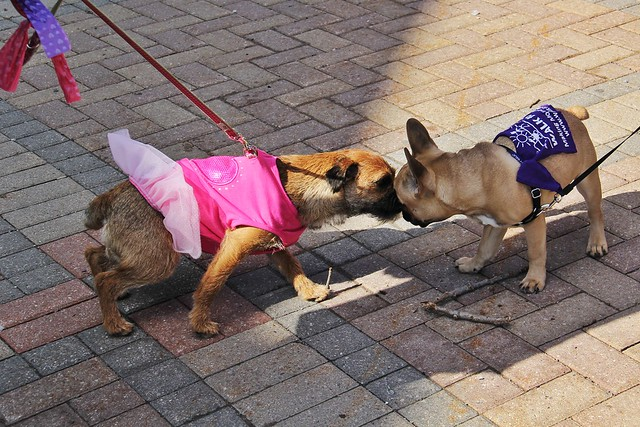 kiss kiss pups