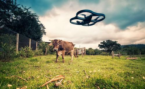 Drone vs Cow