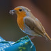 Garden Robin sharpness test (see Original size for best detail) by keith27a