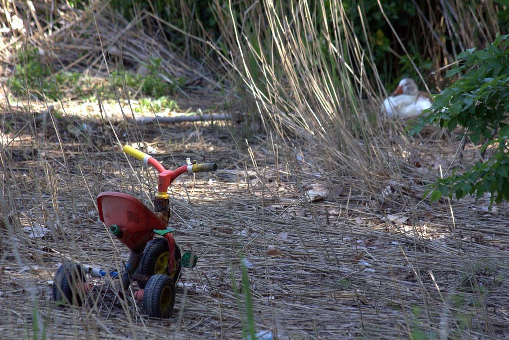 mayo en los jardines de Aranjuez-129