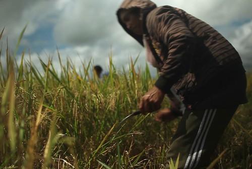 Harvesting Hope - Philippines