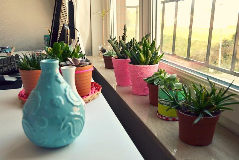 plantas en el bureau
