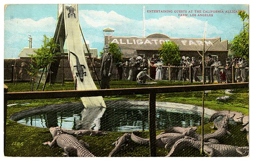 Entertaining guests at the California alligator farm, Los Angeles