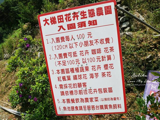 陽明山繡球花大梯田農場 (1)