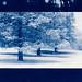 Cyanotype: Winter
